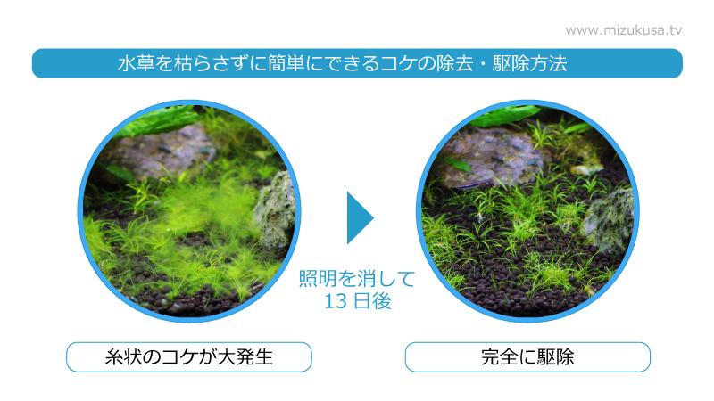 水草を枯らさずに簡単にできるコケの除去・駆除方法