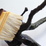 流木に付いた黒髭コケを刷毛で食酢を塗る