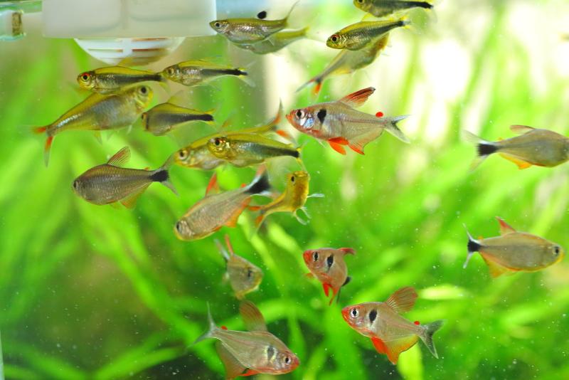 熱帯魚が原因で発生する場合