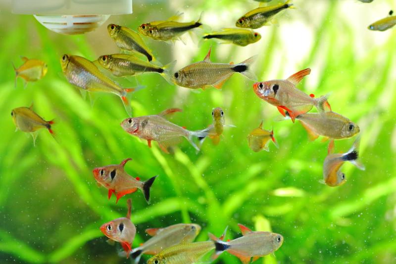 魚に与える餌の量に比例して発生する