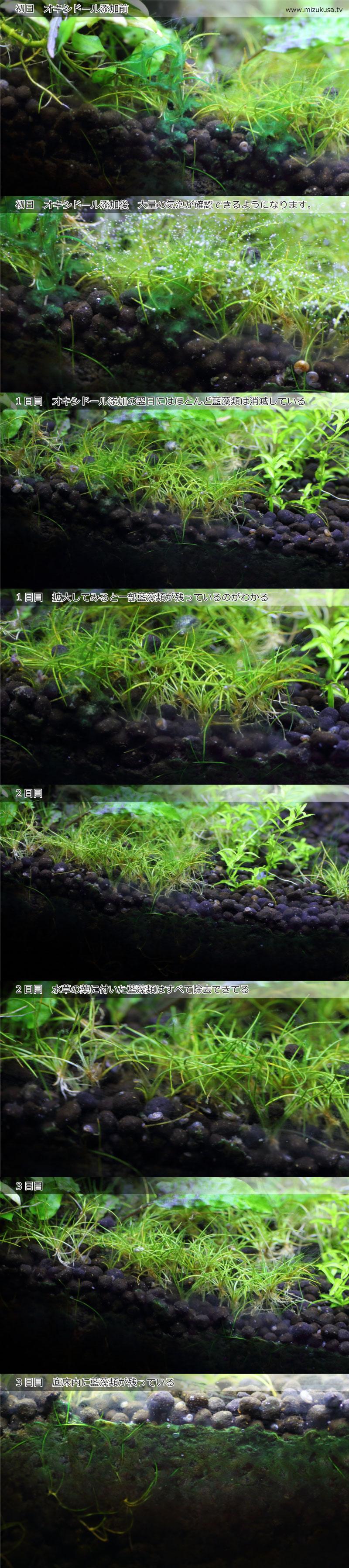 オキシドールによる藍藻類の高速除去