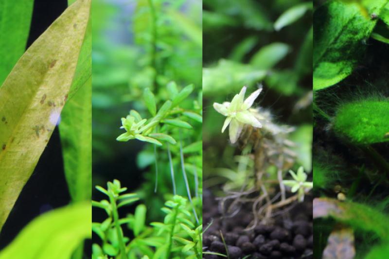 水草が育たない・枯れる原因を知