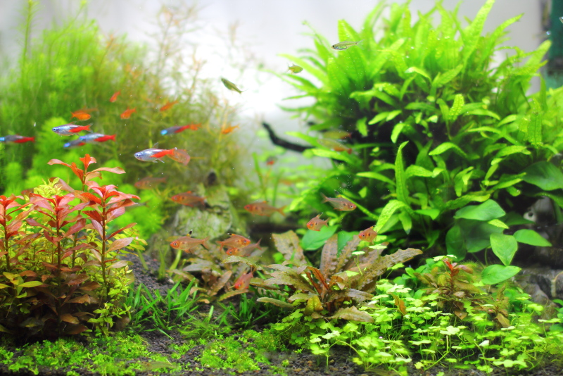 水草の育ちやすい水質づくり