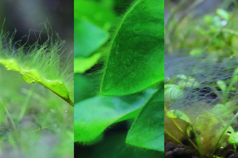 糸状のコケの発生の原因と除去方法