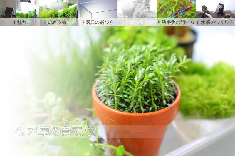 4.水草の育て方