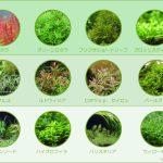 【失敗しない為の水草の選び方】初心者向けおすすめの水草と育て方