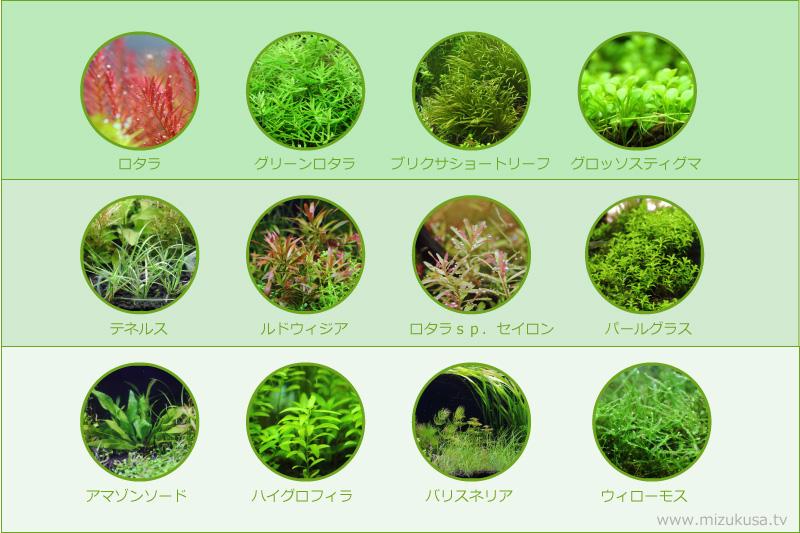【失敗しない為の水草の選び方】初心者向けおすすめの水草と種類