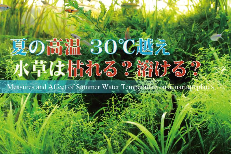 夏の高温による水草の影響と対策