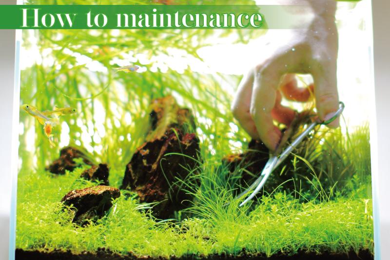 小型水草水槽のメンテナンス方法