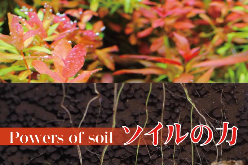 水草育成に大切なソイルの寿命や劣化について