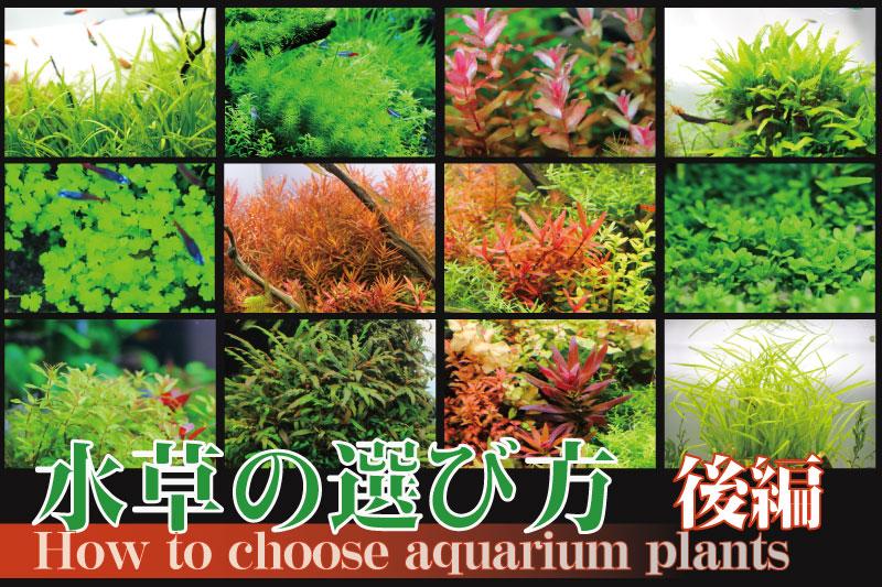 【後編】水草の選び方 綺麗なレイアウト水槽を作りたい