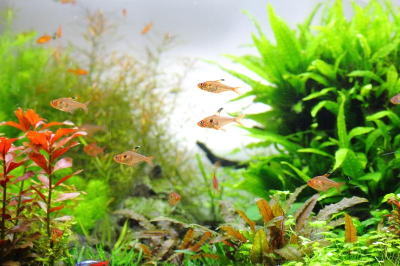 部屋に癒しの空間を作る熱帯魚と水草