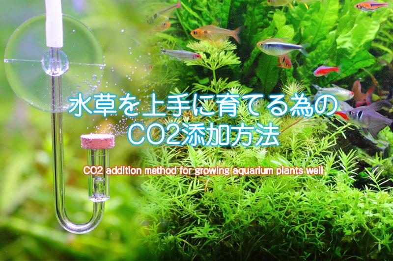 水草を上手に育てる為のCO2添加方法