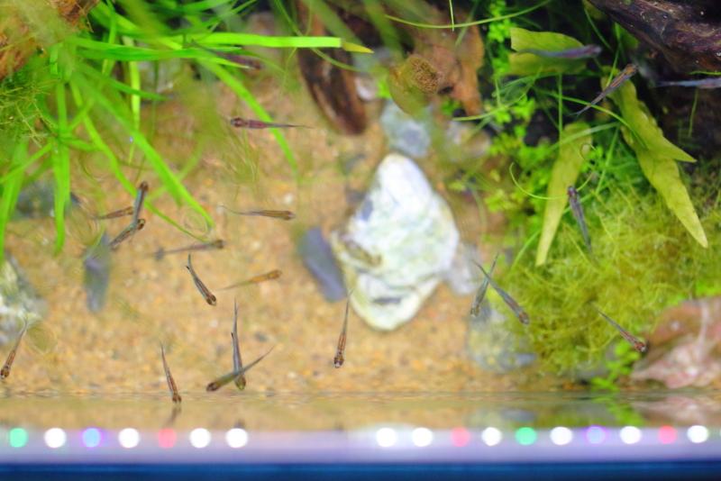 小魚が泳ぐ水辺をイメージした水草水槽 ~砂と石の選び方~
